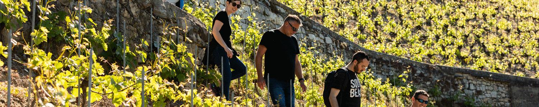Expérience Balade dans le vignoble