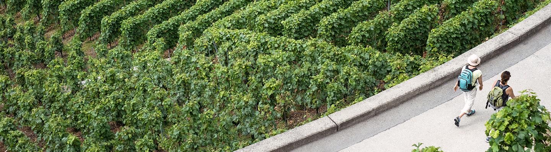 Découvrir le monde du vin
